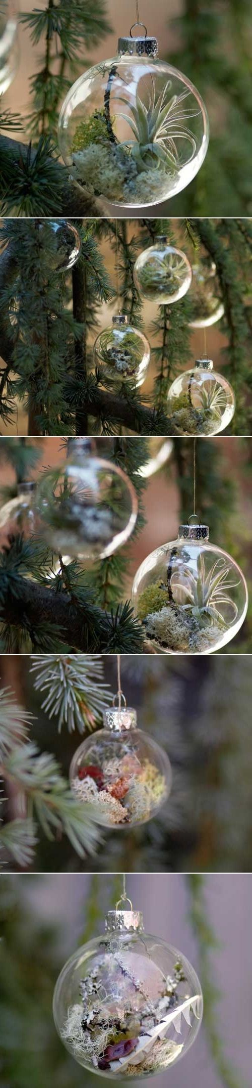 DIY Ornaments with Living Plants.