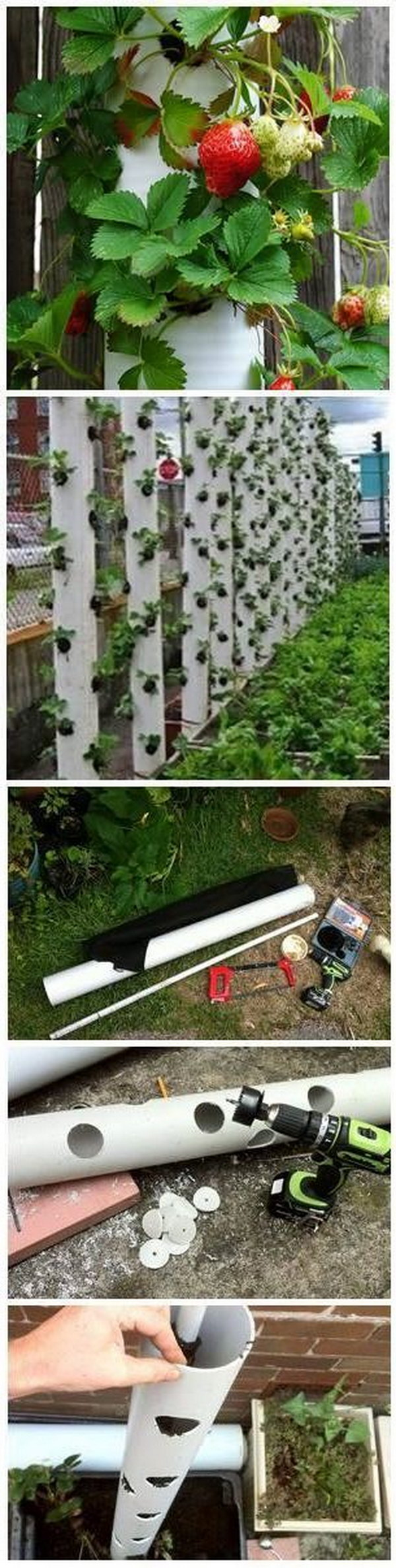 DIY Strawberry Vertical Garden Made From PVC Tubes