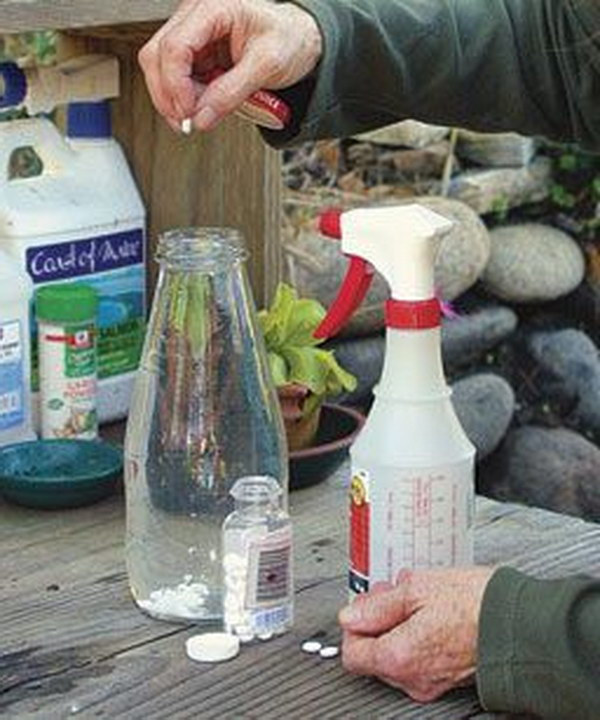 Use An Aspirin Foliar Spray To Combat Black Spot, Powdery Mildew, And Rust.