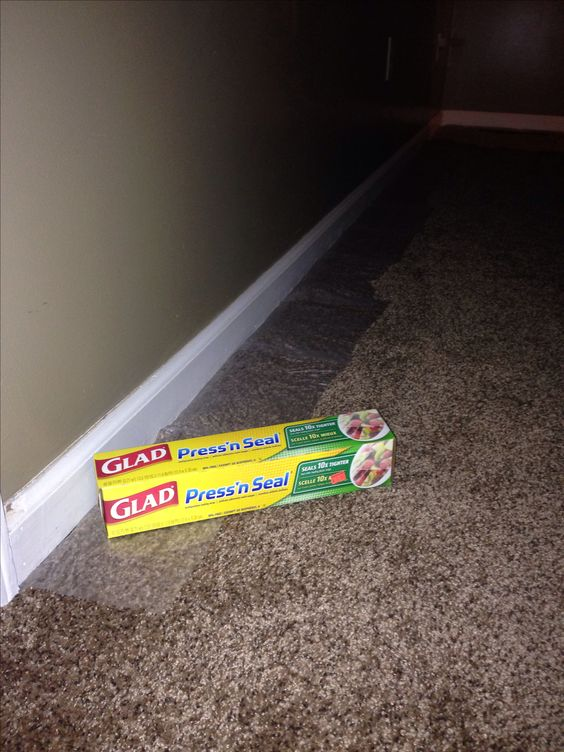 Painting Baseboards? Protect Your Carpets with Press'n Seal!.